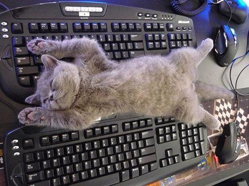 猫に生活を脅かされる16