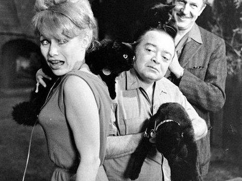 黒猫のオーディション06