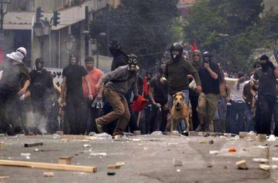 ギリシャの暴動犬16