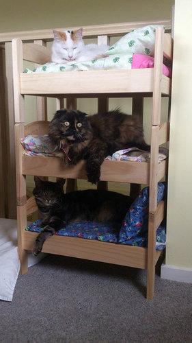猫ベッド14