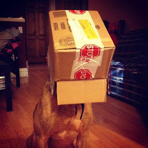 忍耐強い犬11