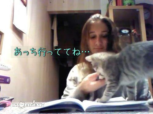 宿題を邪魔する子猫00
