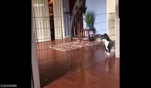 「犬の柵で一番効果的なのは」01