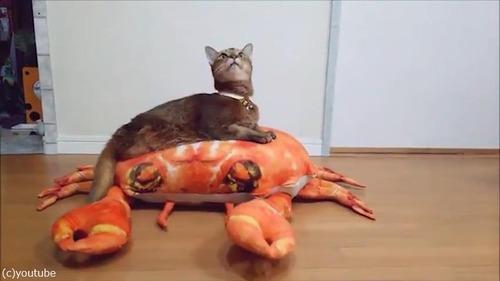 後ろ足のない猫の移動方法が斬新01