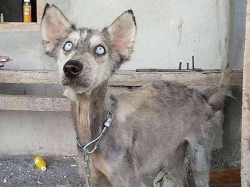 弱っていた犬をケア00