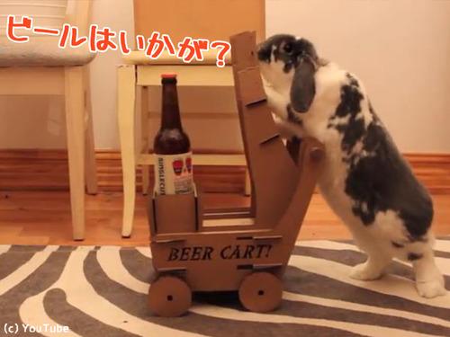 ビールを持ってきてくれるウサギ00
