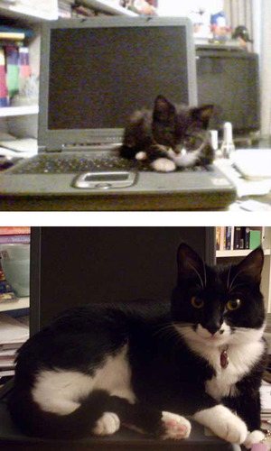 成長した猫04
