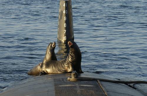 潜水艦にセイウチ04