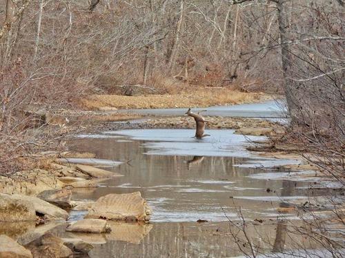 野生の鹿が足をすべらせるとき05