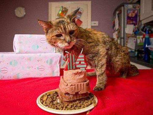 最高齢の猫00
