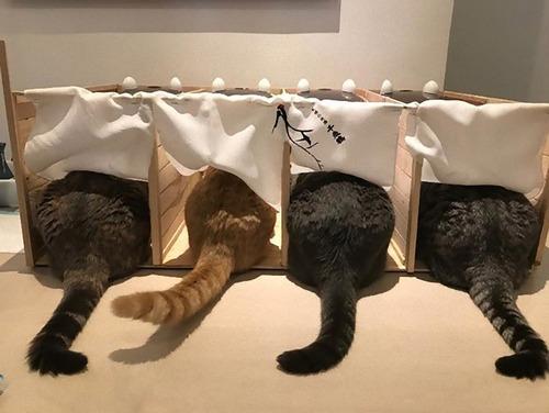 他の猫のエサを食べるデブ猫対策06