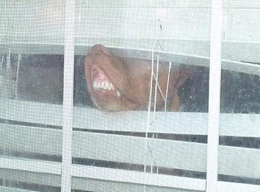 窓ガラスにへばりついて変顔になった動物たち15