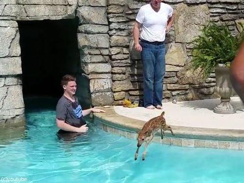 プールの奥に子鹿がいる04