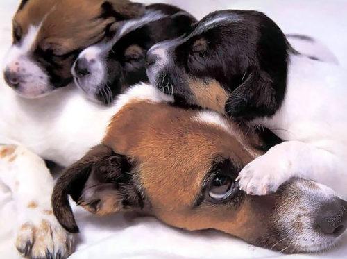 ママ猫&犬が子育てに奮闘してるときの顔13