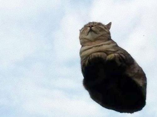 ガラスの上の猫01