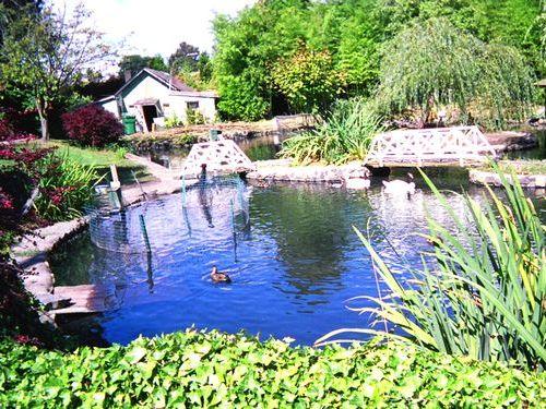 おじいさんと池