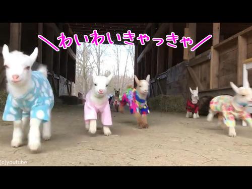 赤ちゃんヤギたちのパジャマパーティー00
