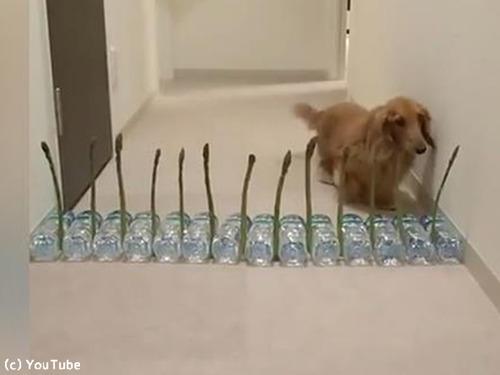 アスパラガスVS犬00