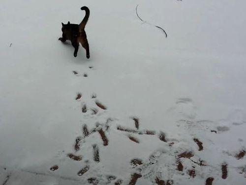猫と初めての雪01