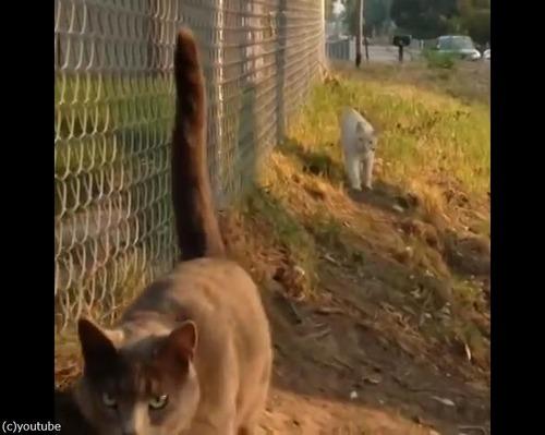 この猫は自分を車だと思ってる01
