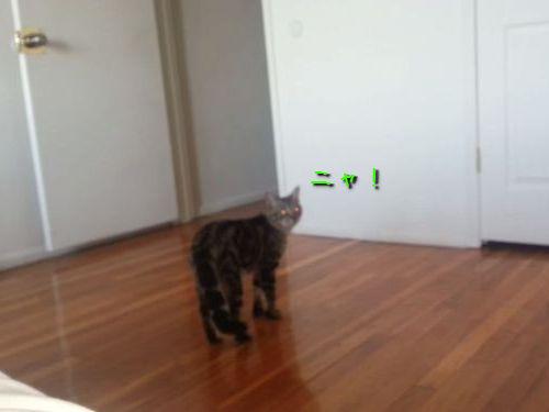 2足歩行の猫00