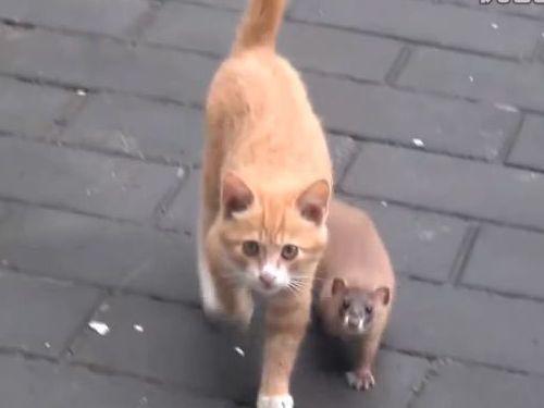 猫とイタチ01