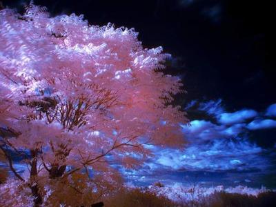 カラー赤外線02