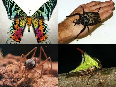 世界の珍虫