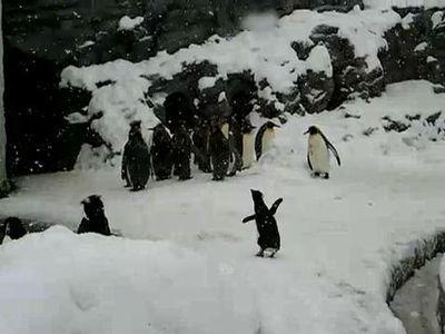 はしゃぐペンギン