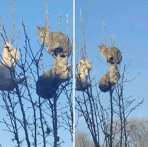 鳥のように木に止まる猫たち06