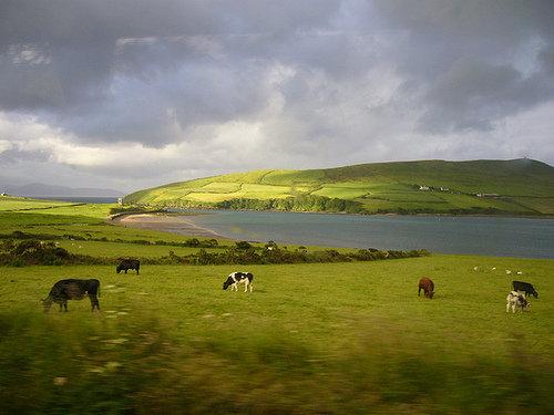 アイルランド「ディングル」06