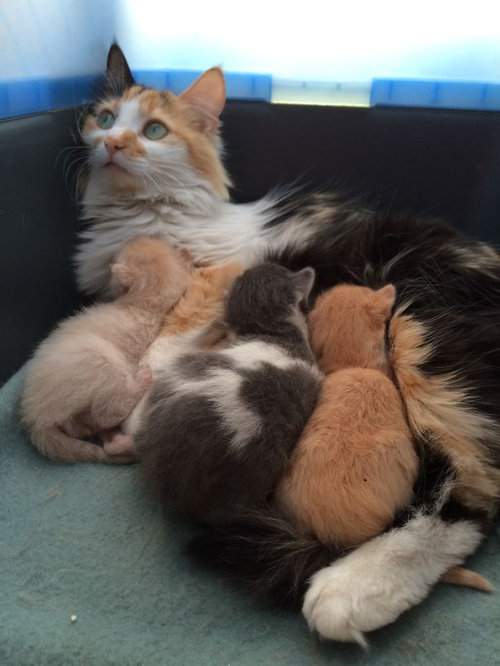ママ猫&犬が子育てに奮闘してるときの顔11