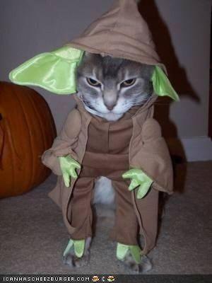 猫スターウォーズ07