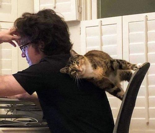 重力を無視する猫01