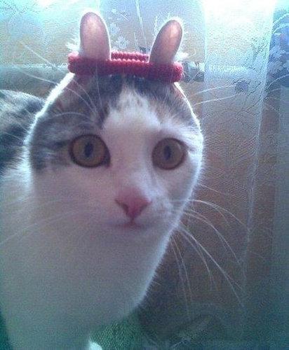 前世は別の動物だったであろう猫04