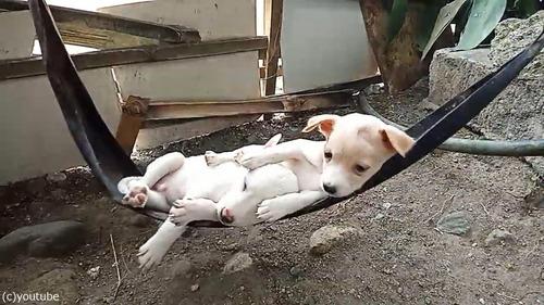 ハンモックで眠る子犬たち02
