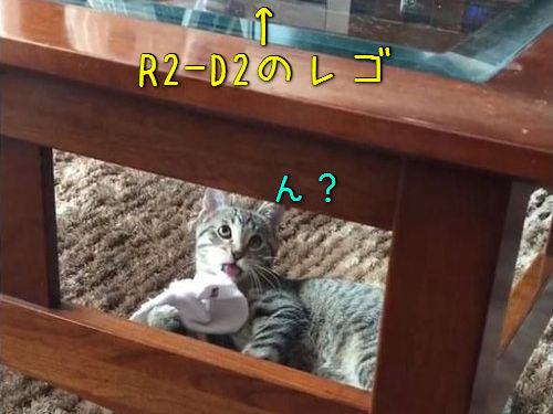 猫が「R2D2のレゴ」に恐れおののく00