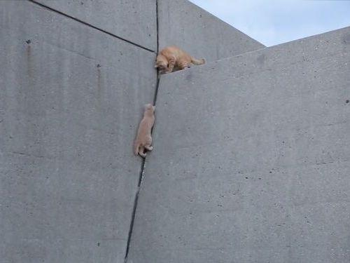 壁を登る子猫、迎える兄01