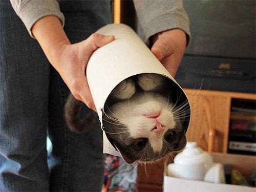 イモムシ猫07