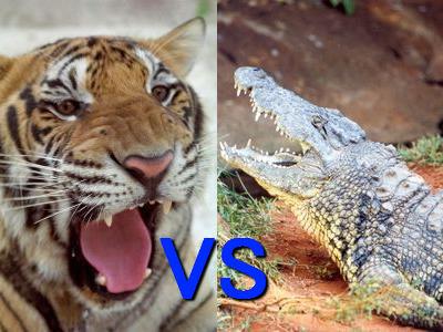 虎vsワニ「いったいどっちが強いのか?」TOP