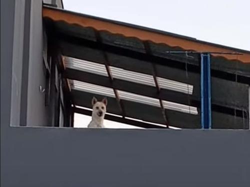 ジャンプして顔を出す犬