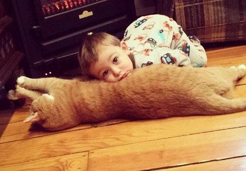 赤ちゃんの育ての親は猫03
