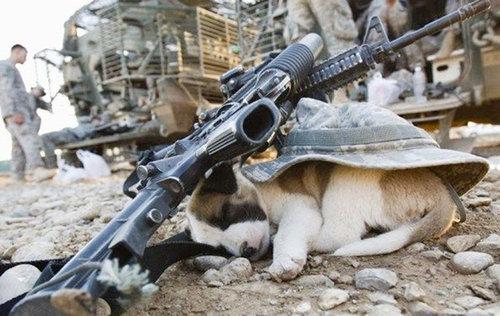 子犬はどこでも寝れる12