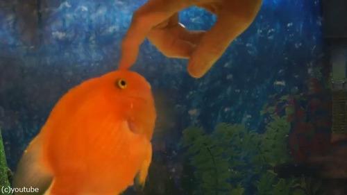 なつっこい魚04