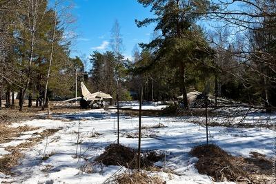ロシアの森01