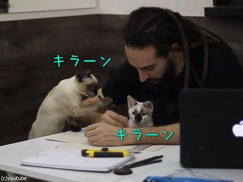 猫が3匹いるところで仕事00