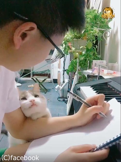 この猫は絶対自分の可愛さを知ってる04