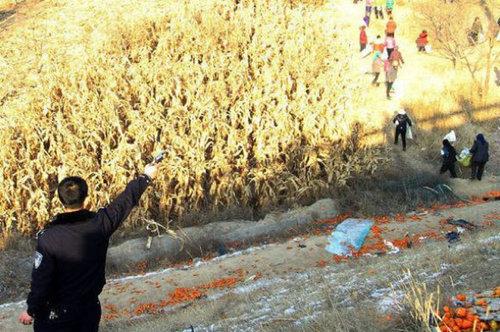 中国でみかんトラックが横転した結果02