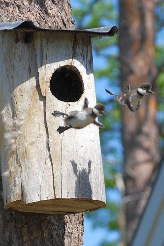 01跳ぶ・飛ぶ動物たち