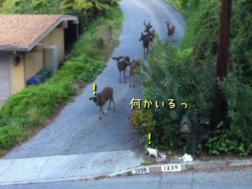 猫と鹿が出会った
